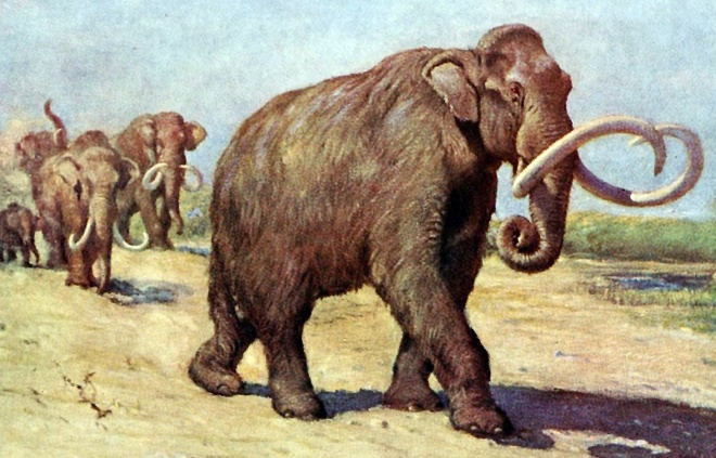 Columbian_mammoth_TFA